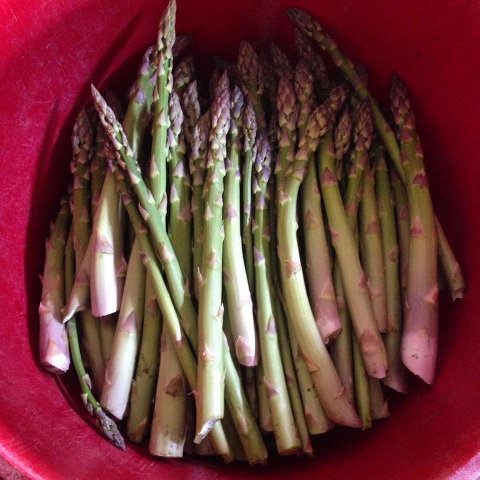asparagusbucket